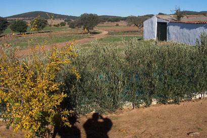 241 OPM 90 Zalamea 008 - Finca en el Valle de los Pedroches de 32 has