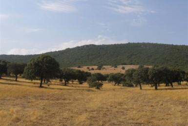 069 ORG 140 Este Badajoz 1 385x258 - Finca de 140 hectáreas de alcornocal, monte, caza y mucha agua