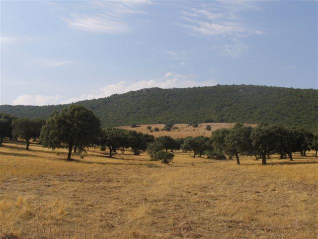069 ORG 140 Este Badajoz 1 - Finca de 140 hectáreas de alcornocal, monte, caza y mucha agua