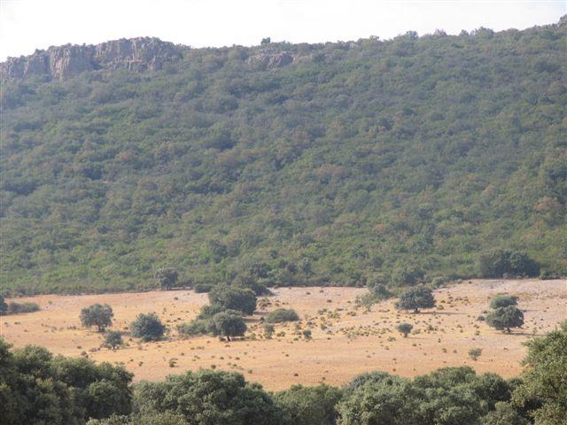 069 ORG 140 Este Badajoz 2 - Finca de 140 hectáreas de alcornocal, monte, caza y mucha agua