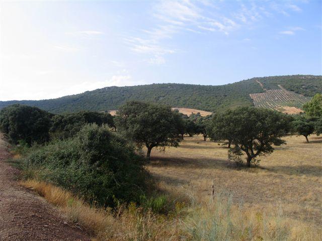 069 ORG 140 Este Badajoz - Finca de 140 hectáreas de alcornocal, monte, caza y mucha agua
