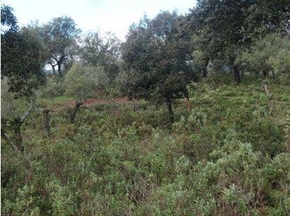 104 248 OPM 410 Cordoba2 - Finca rústica en la sierra de Córdoba de unas 410 hectáreas