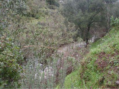 104 248 OPM 410 Cordoba3 - Finca rústica en la sierra de Córdoba de unas 410 hectáreas