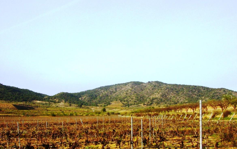638 OPM 110 Murcia 6 1170x738 - Finca de 110 hectáreas en Murcia, con olivos, frutales, almendros y viñedo