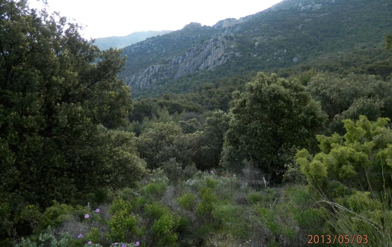 674 OPG 700 Jaén 3 1170x738 - Finca de 700 has, de recreo y caza muy próxima a Jaén
