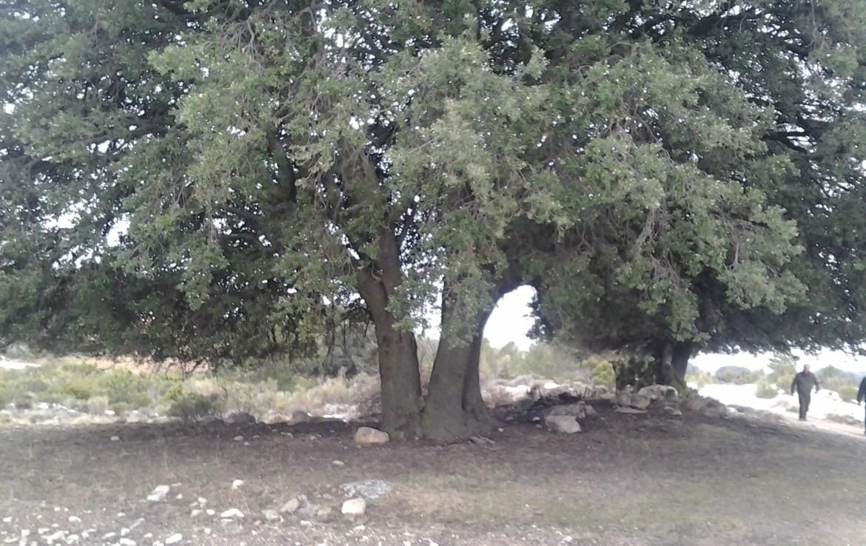 709 OPG 500 Nerpio 8 1170x738 - Finca de recreo y turismo de 450 hectáreas en Nerpio (Albacete)
