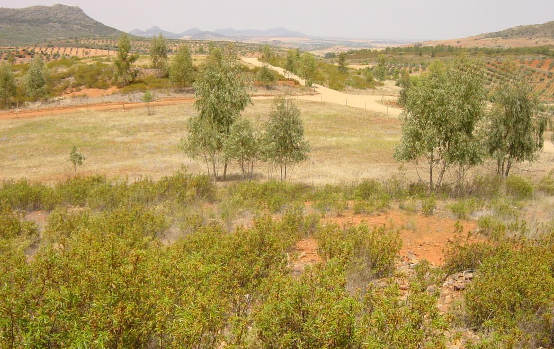 254 OPP Fincas Rústicas SurOeste 1 1170x738 - Finca de 7 has cerca de la Zarza, en los Balancines