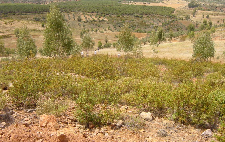 254 OPP Fincas Rústicas SurOeste 2 1170x738 - Finca de 7 has cerca de la Zarza, en los Balancines