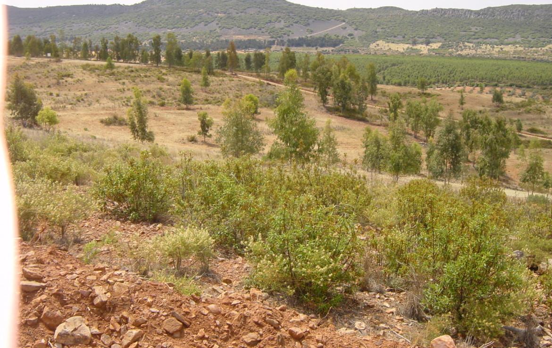 254 OPP Fincas Rústicas SurOeste 3 1170x738 - Finca de 7 has cerca de la Zarza, en los Balancines