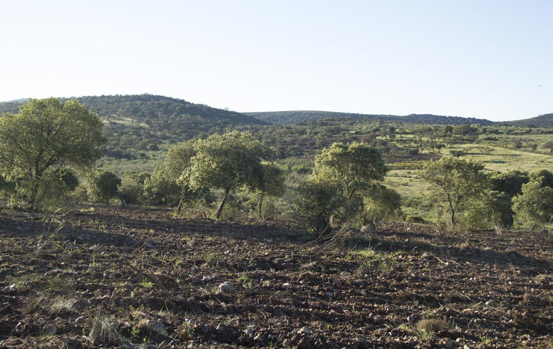 941 OPP Fincas Rústicas SurOEste 1 1170x738 - Finca de 17 hectáreas de alcornoque y encinas en zona Cañaveral (Cáceres)