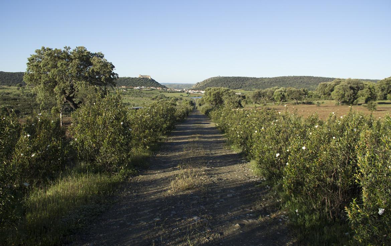 941 OPP Fincas Rústicas SurOEste 3 1170x738 - Finca de 17 hectáreas de alcornoque y encinas en zona Cañaveral (Cáceres)