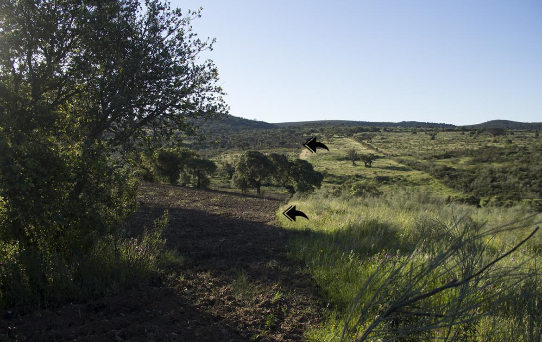 941 OPP Fincas Rústicas SurOEste 4 1170x738 - Finca de 17 hectáreas de alcornoque y encinas en zona Cañaveral (Cáceres)