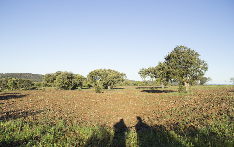 IMG 9887 1170x738 - Finca de 17 hectáreas de alcornoque y encinas en zona Cañaveral (Cáceres)