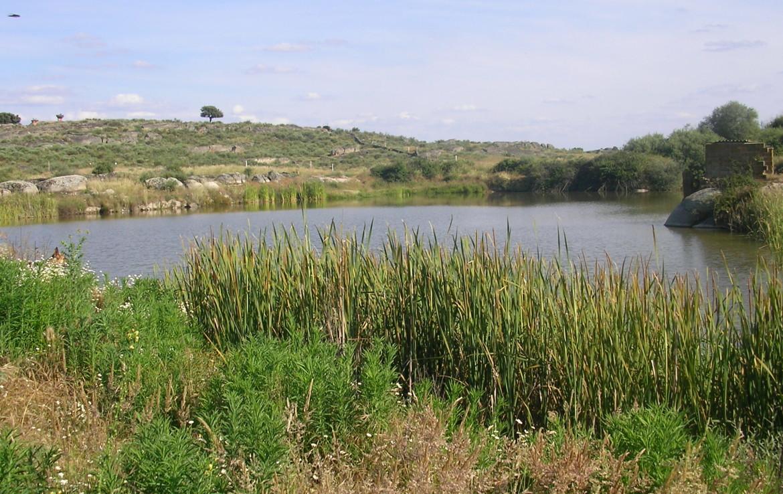 096 OPP Fincas Rústicas SurOeste 2 1170x738 - Finca 31 has muy cerca de Cáceres toda cercada con mucha agua
