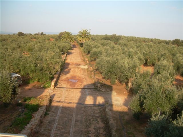 235 OPP Fincas Rústicas SurOeste 5 - Finca de 16 has de olivos a 55 km de Córdoba