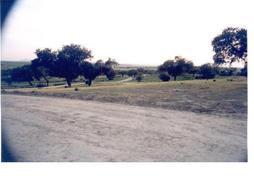311 OPC Fincas Rústicas SurOeste 2 - Vendo parcela de 10.000 metros, Mérida