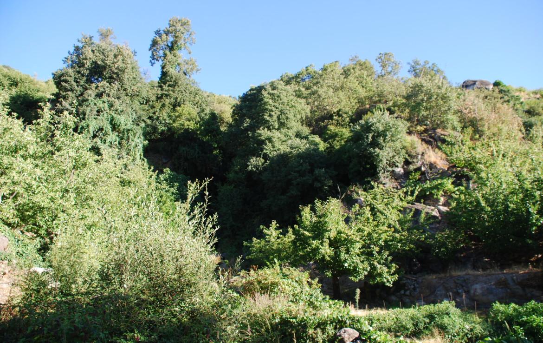 317 OPP Fincas Rústicas SurOeste 3 1170x738 - Precioso molino-almazara con dos plantas de 160 m2, Valle del Jerte (Cáceres)