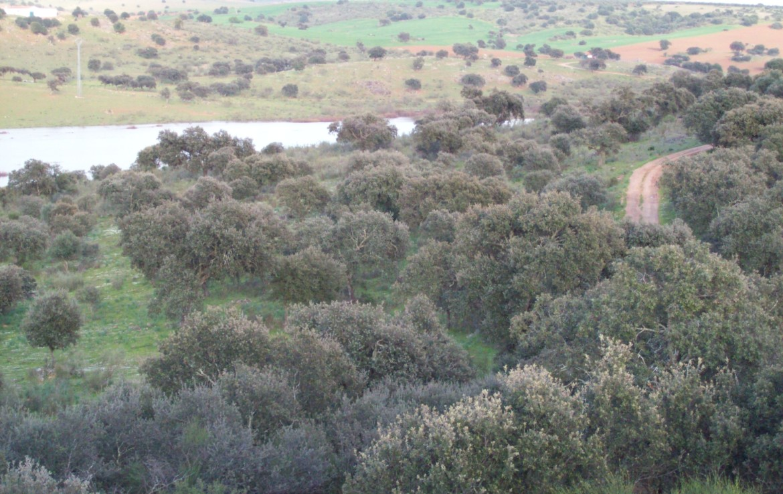 345 OPP Fincas Rústicas SurOeste 1 1170x738 - Finca de 6 has en la orilla de pantano de Alange