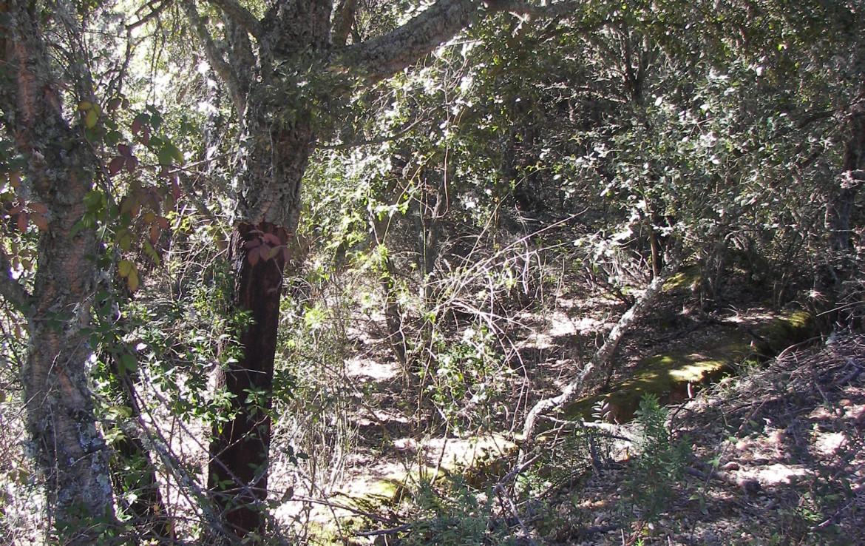 347 OPP Fincas Rústicas SurOeste 1 1170x738 - Finca de 30 hectáreas en La Serena