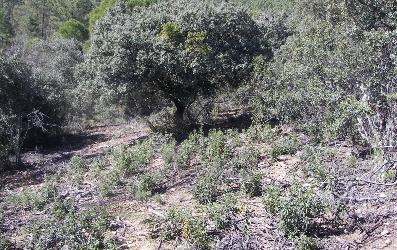 347 OPP Fincas Rústicas SurOeste 1170x738 - Finca de 30 hectáreas en La Serena