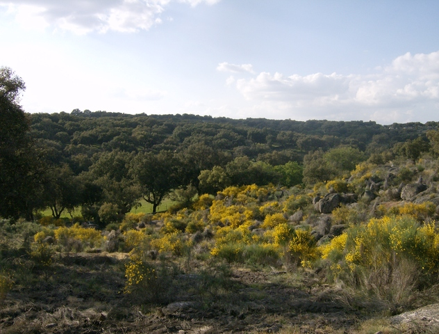 348 OPP Fincas Rústicas SurOeste 1 - Finca de 7 has de alcornocales y canchos graníticos a tres km de San Vicente de Alcántara