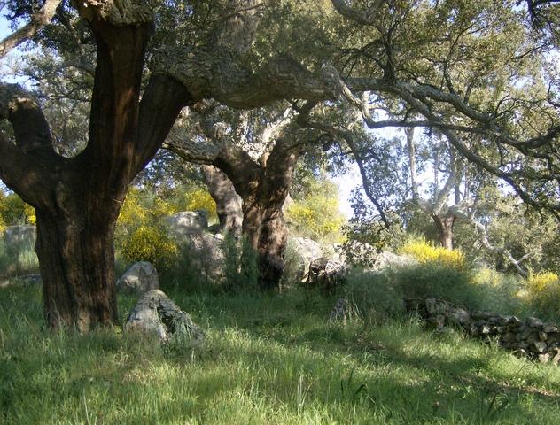 348 OPP Fincas Rústicas SurOeste 2 - Finca de 7 has de alcornocales y canchos graníticos a tres km de San Vicente de Alcántara