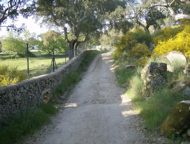 348 OPP Fincas Rústicas SurOeste 3 - Finca de 7 has de alcornocales y canchos graníticos a tres km de San Vicente de Alcántara