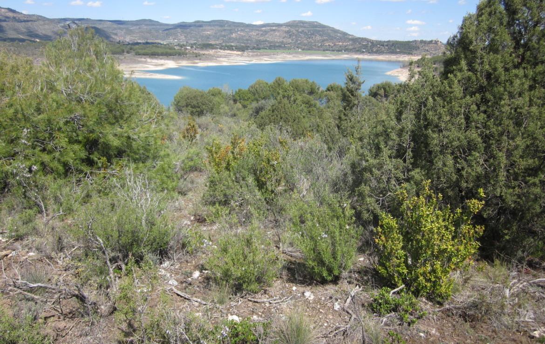 369 OPP 3 1170x738 - Finca de aprox. 50 hectáreas a orillas del embalse de Entrepeñas (Guadalajara)