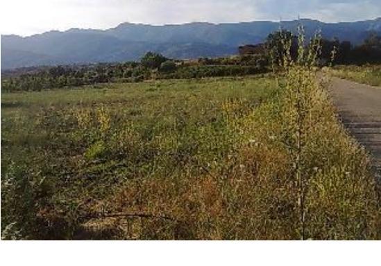 398 OPP Fincas Rústicas SurOeste 1 - Finca de regadío de 13.500 m2 en Villanueva de la Vera