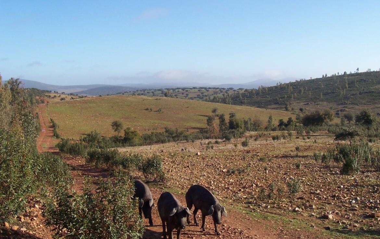 077 OPG Fincas Rústicas SurOeste 1 1170x738 - Finca de 110 hectáreas en el centro de la provincia de Badajoz. Montes, pastos y caza.