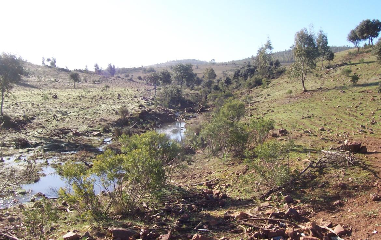 077 OPG Fincas Rústicas SurOeste 1170x738 - Finca de 110 hectáreas en el centro de la provincia de Badajoz. Montes, pastos y caza.