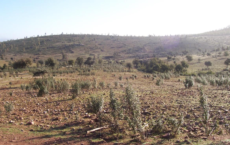 077 OPG Fincas Rústicas SurOeste 2 1170x738 - Finca de 110 hectáreas en el centro de la provincia de Badajoz. Montes, pastos y caza.