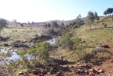 077 OPG Fincas Rústicas SurOeste 385x258 - Finca de 110 hectáreas en el centro de la provincia de Badajoz. Montes, pastos y caza.