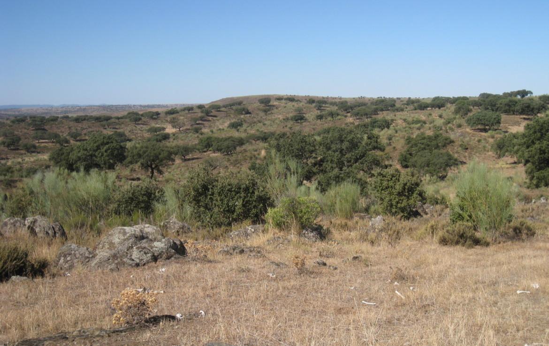 108 OPM Fincas Rústicas SurOEste 1 1170x738 - Finca cerca de 400 has a 25 km de Cáceres. Registro porcino, 1500m2 de naves, depósitos, molinos…Mucha agua