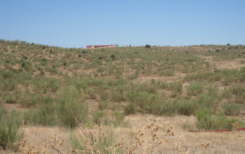 108 OPM Fincas Rústicas SurOEste 1170x738 - Finca cerca de 400 has a 25 km de Cáceres. Registro porcino, 1500m2 de naves, depósitos, molinos…Mucha agua