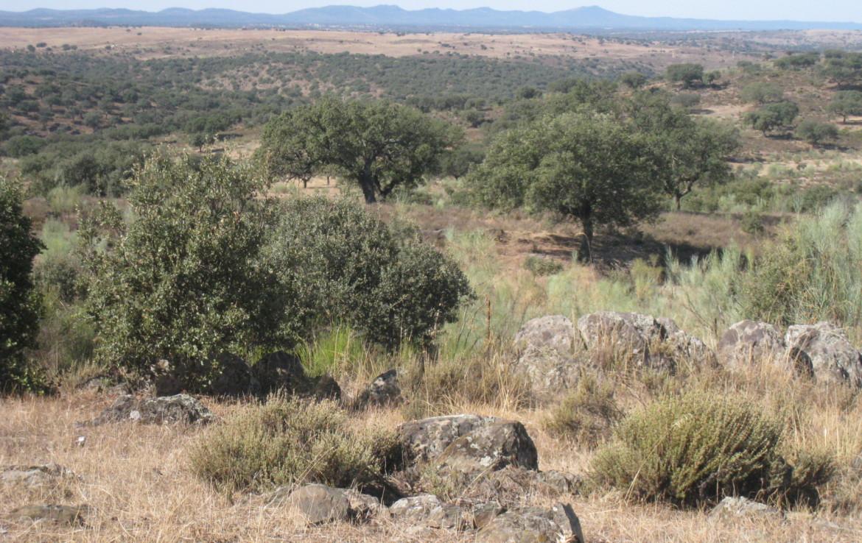 108 OPM Fincas Rústicas SurOEste 2 1170x738 - Finca cerca de 400 has a 25 km de Cáceres. Registro porcino, 1500m2 de naves, depósitos, molinos…Mucha agua