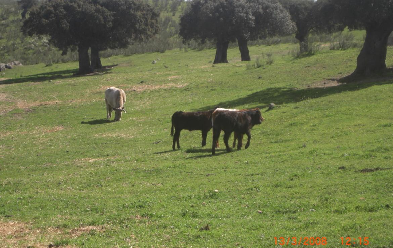 144 OPG. Fincas Rústicas SurOeste 1170x738 - Finca en Valencia de Alcántara 320 has ampliables a 520