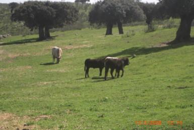 144 OPG. Fincas Rústicas SurOeste 385x258 - Finca en Valencia de Alcántara 320 has ampliables a 520