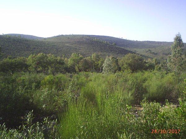 154 OPG Fincas Rústicas SurOeste 3 - Finca de 180 ha. de monte y caza, zona Santiago de Alcántara