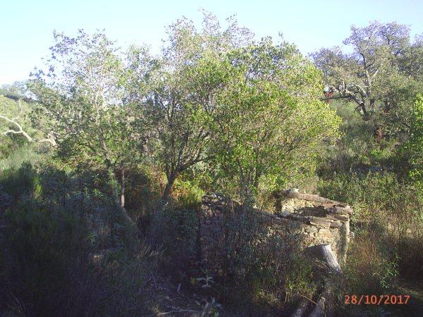 154 OPG Fincas Rústicas SurOeste 4 - Finca de 180 ha. de monte y caza, zona Santiago de Alcántara