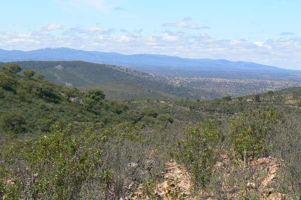 154 OPG Fincas Rústicas SurOeste 7 - Finca de 180 ha. de monte y caza, zona Santiago de Alcántara