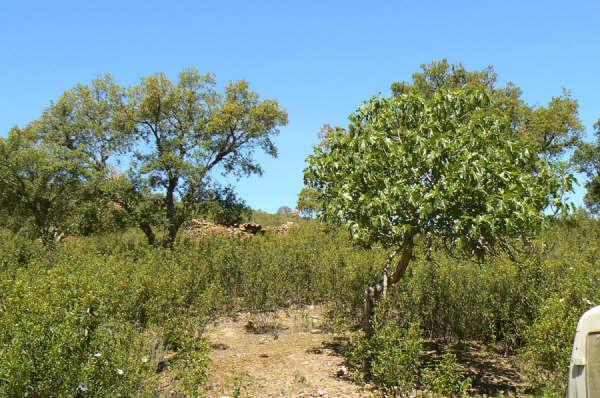 154 OPG Fincas Rústicas SurOeste 8 - Finca de 180 ha. de monte y caza, zona Santiago de Alcántara