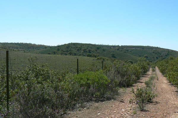 154 OPG Fincas Rústicas SurOeste - Finca de 180 ha. de monte y caza, zona Santiago de Alcántara