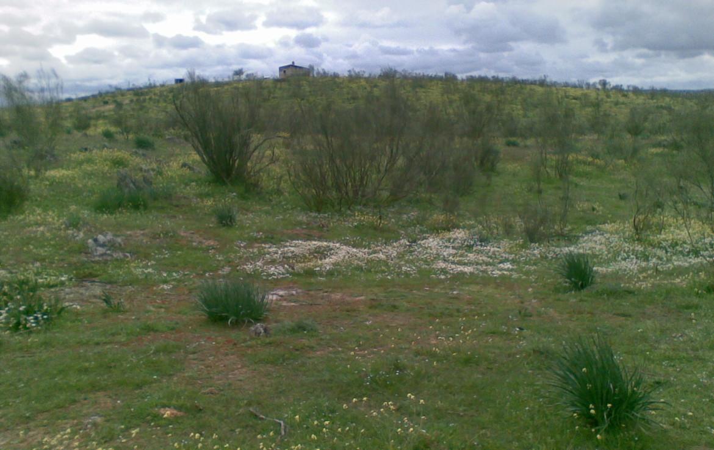 438 OPM Fincas Rústicas SurOeste 2 1170x738 - Finca ganadera de 170 has, de pastos con algo de encina, a 25 km de Trujillo