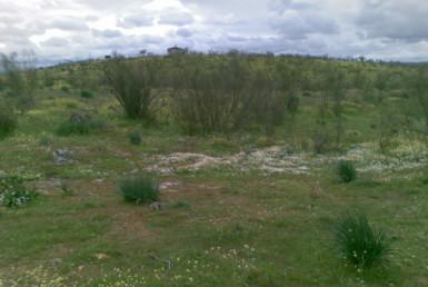 438 OPM Fincas Rústicas SurOeste 2 385x258 - Finca ganadera de 170 has, de pastos con algo de encina, a 25 km de Trujillo