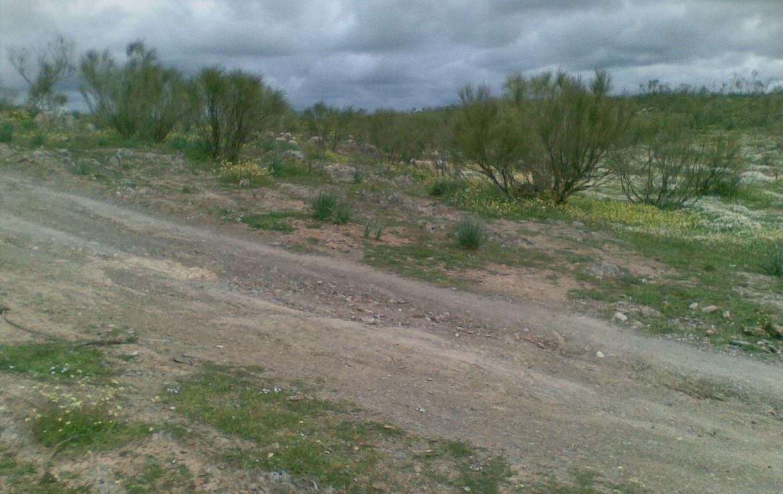 438 OPM Fincas Rústicas SurOeste 3 1170x738 - Finca ganadera de 170 has, de pastos con algo de encina, a 25 km de Trujillo