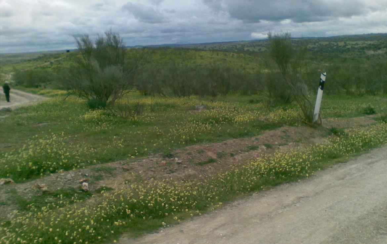 438 OPM Fincas Rústicas SurOeste 4 1170x738 - Finca ganadera de 170 has, de pastos con algo de encina, a 25 km de Trujillo