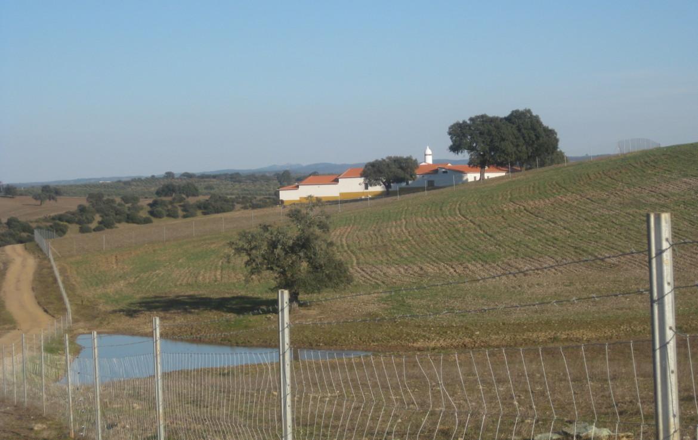 458 OPP Fincas Rústicas SurOeste 1 1170x738 - Finca de 50 has en Moura ( Portugal), 34 has de regadío y resto de encinado