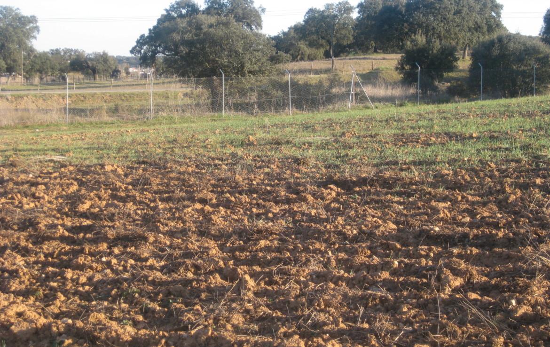 458 OPP Fincas Rústicas SurOeste 1170x738 - Finca de 50 has en Moura ( Portugal), 34 has de regadío y resto de encinado