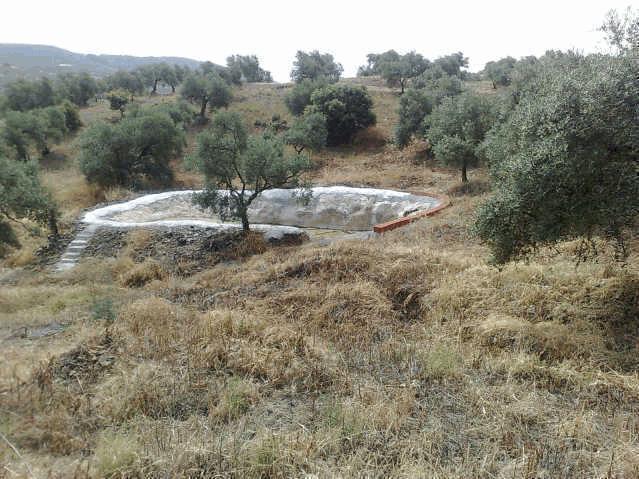 469 OPP Fincas Rústicas SurOeste - Finca de 16 has de olivar de secano con casa nueva en la zona de Azuaga